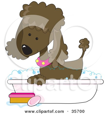 Clipart Illustration of a Cute Chocolate Poodle In A Pink Collar, Taking A Sudsy Bubble Bath In A Tub by Maria Bell