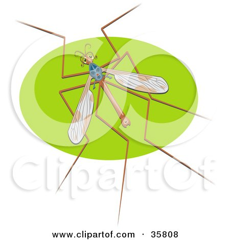 Clipart Illustration of a Crane Fly, Also Called A Mosquito Hawk, On A Green Oval by Prawny