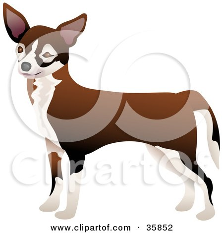 Clipart Illustration of a Cute Brown And White Chihuahua Dog Facing Left by Prawny