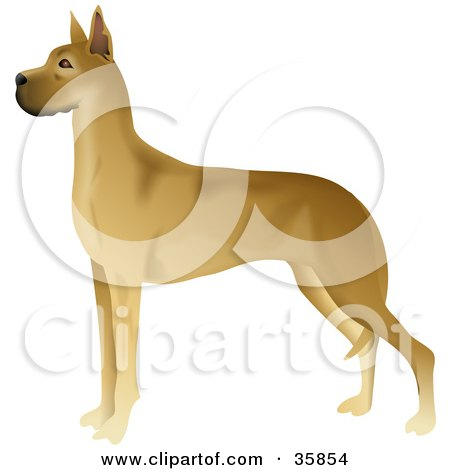Clipart Illustration of a Gorgeous Brown Great Dane Standing In Profile, Facing Left by Prawny