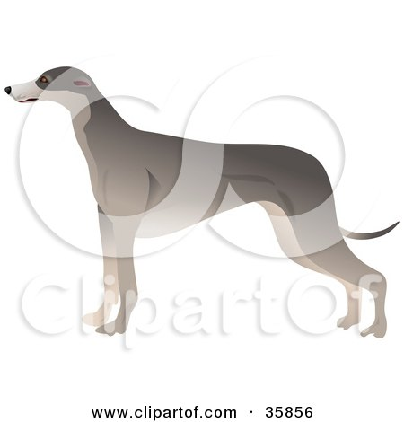 Clipart Illustration of a Slender Greyhound Dog In Profile, Standing And Facing Left by Prawny