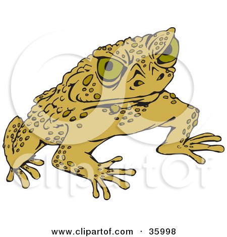 Clipart Illustration of a Warty Green Toad Glaring At The Viewer by Dennis Holmes Designs