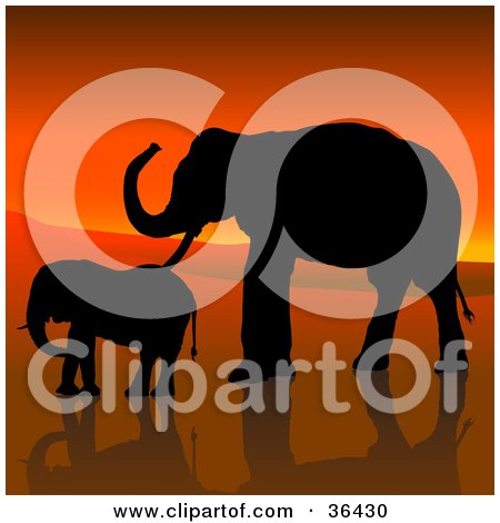 Clipart Illustration of a Black Silhouetted Adult And Baby Elephant In Profile, Walking Against An African Sunset by dero
