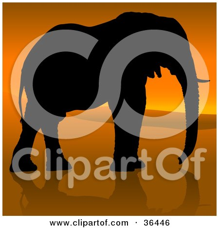 Clipart Illustration of a Black Silhouetted Adult Elephant In Profile, Walking Against An African Sunset by dero
