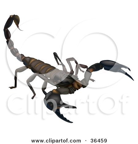 Clipart Illustration of a Dark Brown Scorpion Holding His Telson Stinger Up, On A White Background by dero