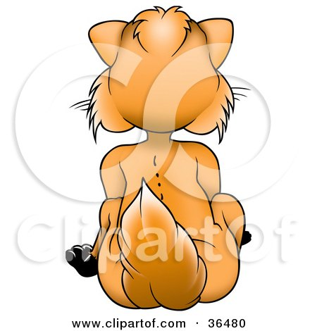 Clipart Illustration of an Orange Fox Sitting And Facing In The Opposite Direction by dero