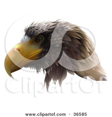 bald eagle, golden eagle, eagles soar, kite, flying eagle, tattoo eagle,