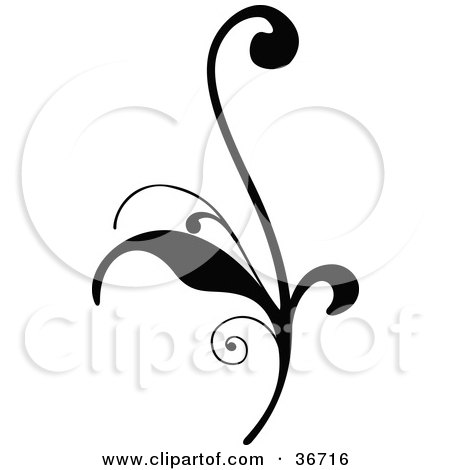 Delicate Black Silhouetted Elegant Leafy Scroll Design Posters, Art Prints