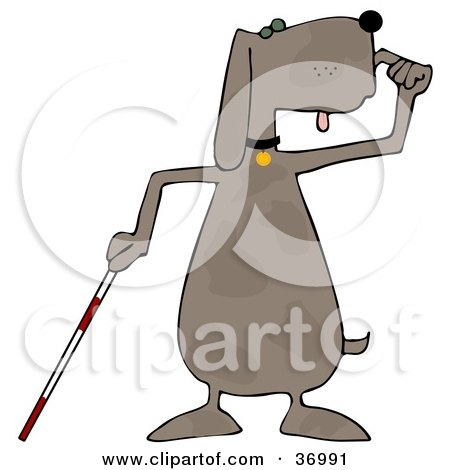 Blind Dog Using a White Cane Posters, Art Prints