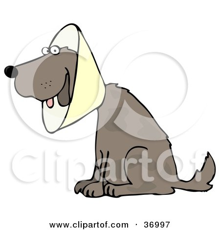 Clipart Illustration of a Brown Dog Wearing An Elizabethan Collar While Recovering by djart