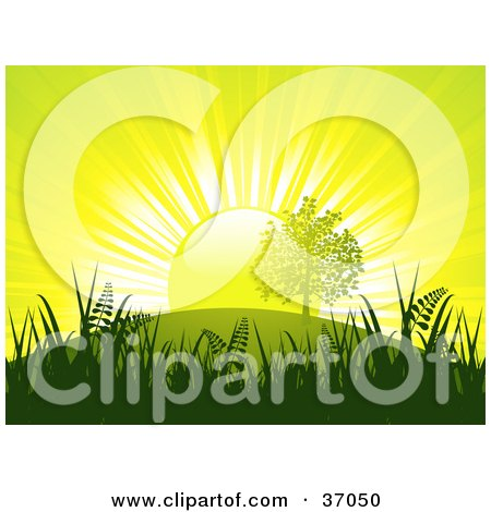Clipart Illustration of Bright Light Of The Sun Silhouetted Grasses And Trees While Setting Behind A Hill In A Yellow Sky by elaineitalia