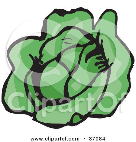 Clipart Illustration of a Head Of Fresh, Green And Organic Lettuce by Dennis Holmes Designs