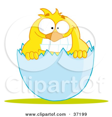 Clipart Illustration of a Yellow Chick With A Big Toothy Grin, Peeking Out Of An Egg Shell by Hit Toon