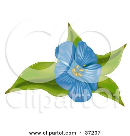 Anemone Flower on Clipart Illustration Of A Blue Anemone Flower On Green Leaves Jpg