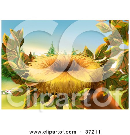 Cartoon of eggs in a bird nest royalty free vector clipart by