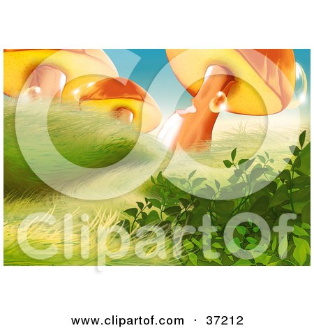 Clipart Illustration of a Lower View Of Windblown Grass, Plants And Dew Covered Orange Mushrooms In Sunlight by dero