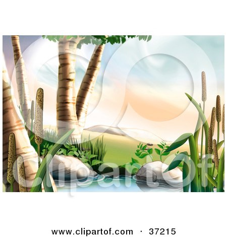 Clipart Illustration of Birch Trees And Cattail Plants Along The Side Of A Creek by dero