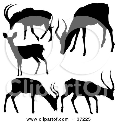 Clipart Illustration of Antelope Silhouettes, In Black, On A White Background by dero