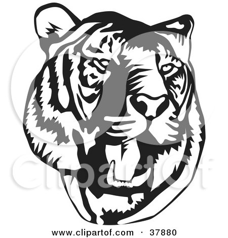 Clipart Illustration of a Black And White Roaring Tiger Head by David Rey