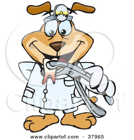 Clipart Illustration of a Dentist Dog Wearing A Head Lamp And Holding Out An Extracted Tooth by Dennis Holmes Designs