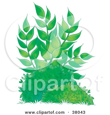 Clipart Illustration of a Tall Leafy Plant Growing Behind Bushes by Alex Bannykh
