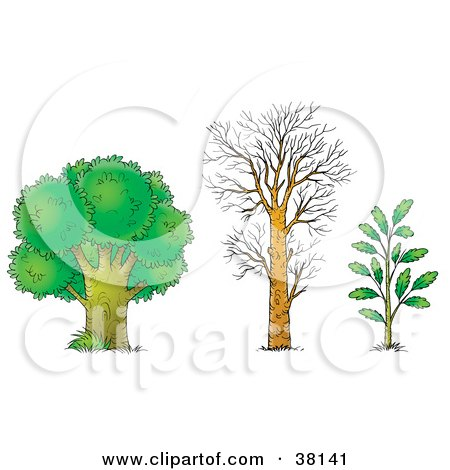 Clipart Illustration of an Adult Tree, Bare Tree And Young Tree by Alex Bannykh