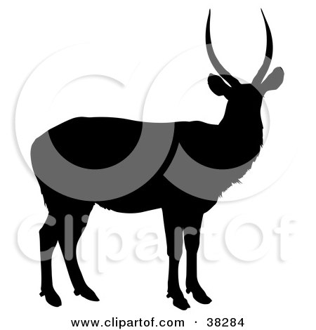 Clipart Illustration of a Black Silhouette Of An Antelope With Slightly Curved Antlers by dero