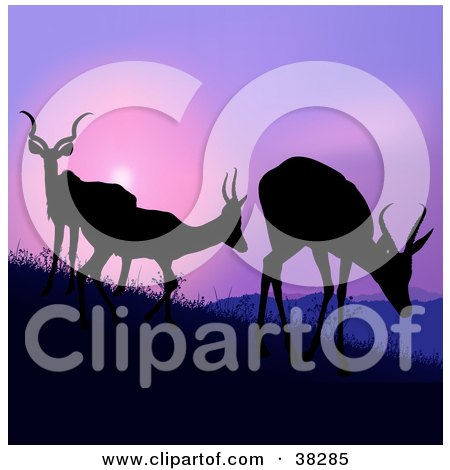 Clipart Illustration of Three Silhouetted Antelope Grazing On A Hillside, Against A Purple Sunset by dero