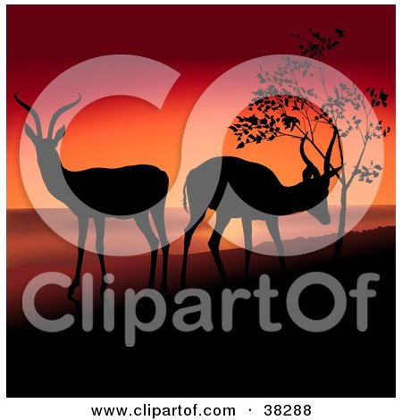 Clipart Illustration of Two Antelope Grazing And Silhouetted On A Hill Against A Red Sunset by dero