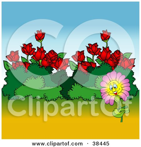 Nature Background Of A Happy Pink Flower By Bushes And Red Roses Posters, Art Prints