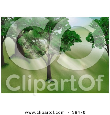 Clipart Illustration of Light Shining Through The Leaves Of Trees On A Hillside by dero