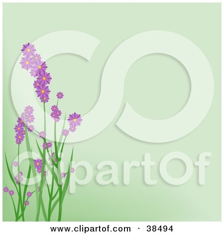 Clipart Illustration of Purple Spring Flowers On Green Stalks Over A Pale Green Background  by dero