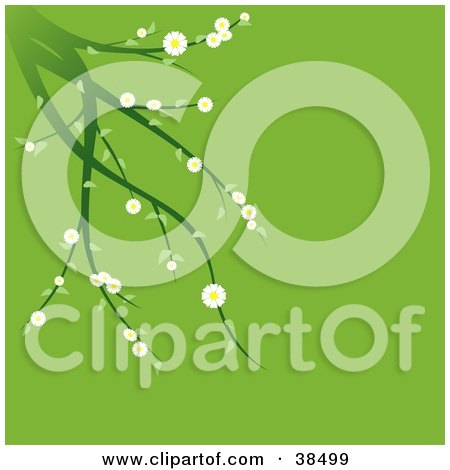 Clipart Illustration of a Green Plant With White Spring Flowers Suspended Over A Green Background by dero