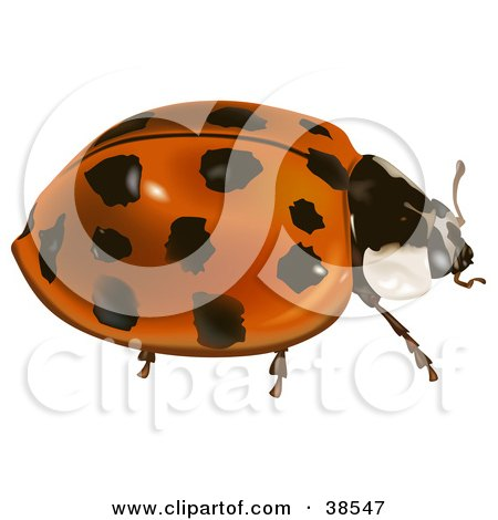 Clipart Illustration of an Asian Lady Beetle, Harlequin Ladybird, Multicolored Asian Lady Beetle, Or Halloween Lady Beetle (Harmonia Axyridis) by dero