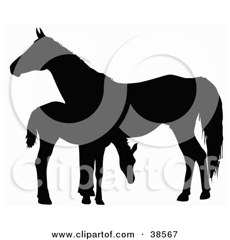 Clipart Illustration of a Silhouette Of A Foal Grazing By A Horse by dero