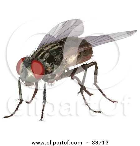Clipart Illustration of a Housefly (Musca domestica) by dero