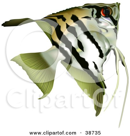 Clipart Illustration of a Striped Angelfish (Pterophyllum Scalare) by dero