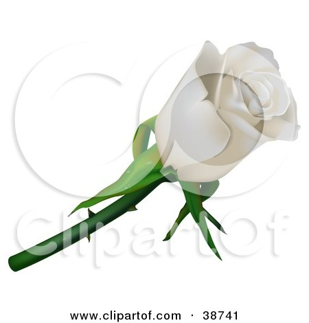 Clipart Illustration of a Single White Rose With Thorns by dero