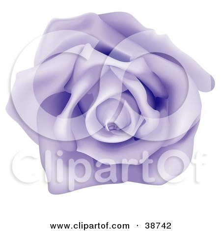 Clipart Illustration of a Fully Bloomed Single Purple Rose by dero