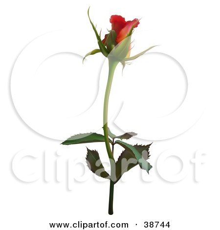 Clipart Illustration of a Single Red Rose by dero