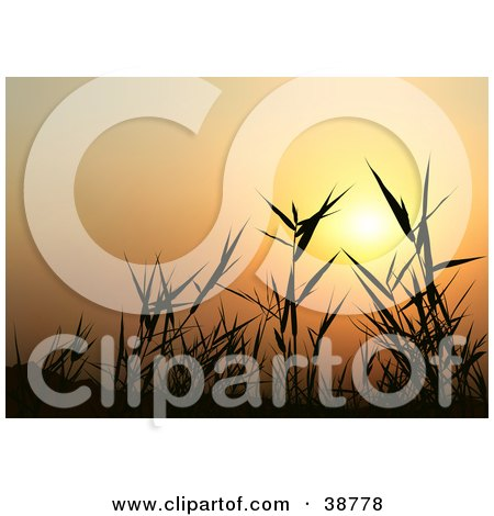 Clipart Illustration of an Orange Sunset Silhouetting Grasses by dero