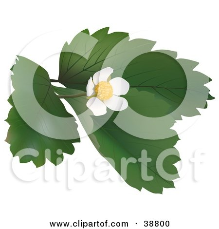 Clipart Illustration of a Blossoming Wild Strawberry Plant by dero