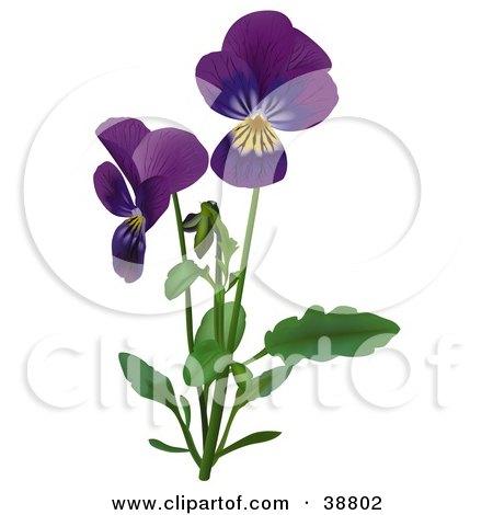 Clipart Illustration of Purple Viola, Sweet Violet, English Violet, Common Violet, Or Garden Violet (Viola Odorata) Flowers by dero