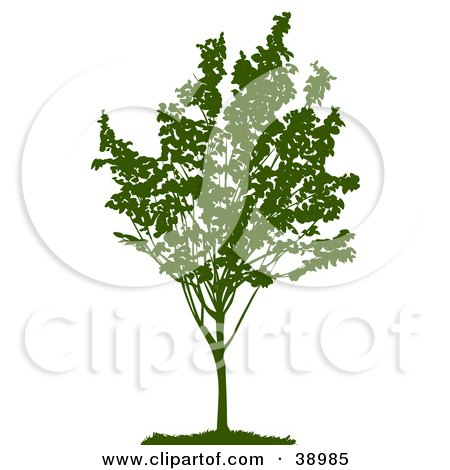 Clipart Illustration of a Young Green Silhouetted Tree With Foliage by Tonis Pan