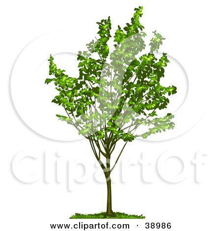Clipart Illustration of a Young Tree With Green Foliage by Tonis Pan