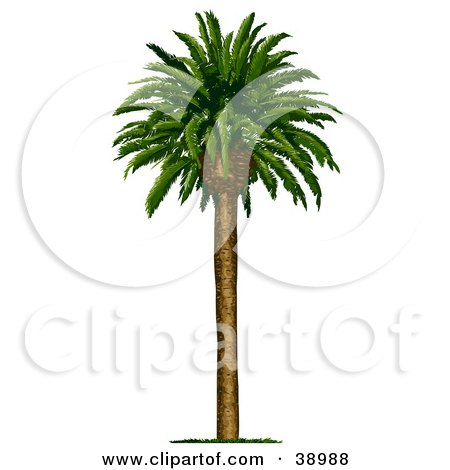 Clipart Illustration of a Straight And Tall Coconut Palm Tree With Green Foliage by Tonis Pan