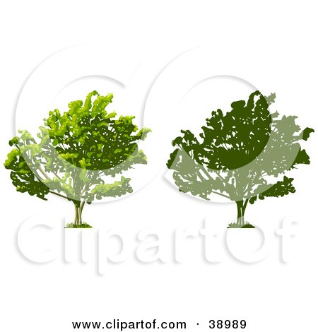 Clipart Illustration of a Tree Thick With Foliage, Also Shown In Silhouette by Tonis Pan