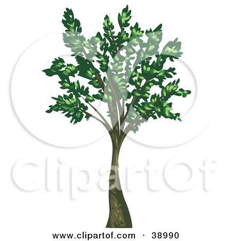 Clipart Illustration of a Tall Mature Tree With Green Leaves Growing From The Branches by Tonis Pan