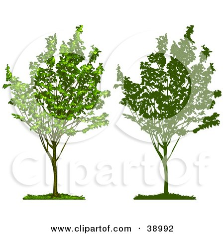 Clipart Illustration of a Young Growing Tree With Green Foliage, Also Shown In Silhouette by Tonis Pan