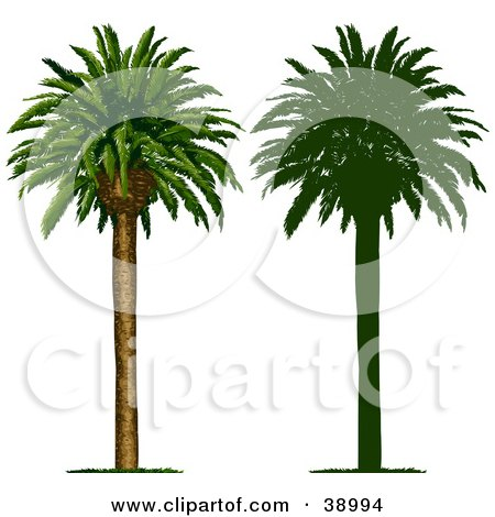 Clipart Illustration of a Tall And Straight Tropical Palm Tree, Also Shown In Silhouette by Tonis Pan